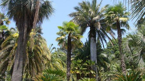 Ботанический парк Дендрарий 2